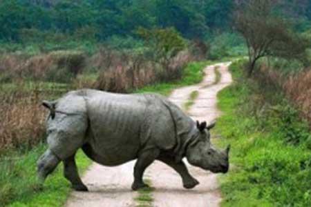 Assam - Justwravel