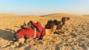 Rummaging through Rajasthan : Thar Desert - Justwravel