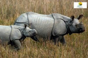 Exploring Assam: Kamakhya to Majuli via Kaziranga National Park - Justwravel
