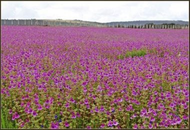 Kaas Plateau: The flowery haven of India