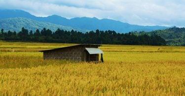 Amazing-scenes-at-Ziro-Valley-Arunachal-Pradesh