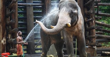 7 Reasons To Visit Kerala - Justwravel
