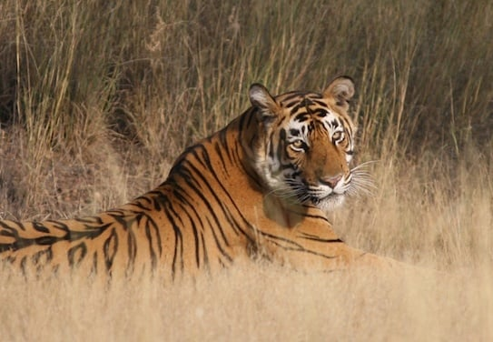 wildlife sanctuaries in Rajasthan justwravel
