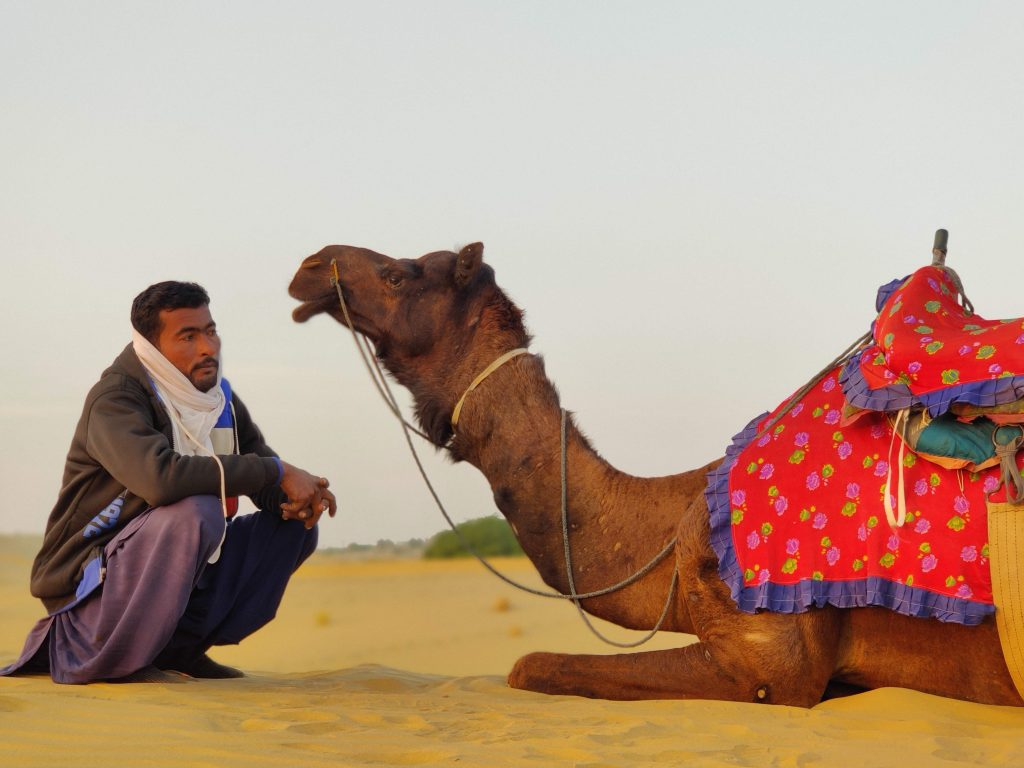 A camel along with its guide in the Rajasthan desert.