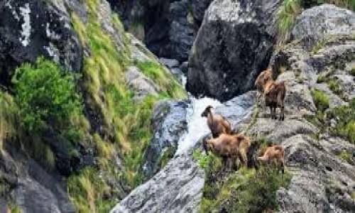 Great Himalayan Park