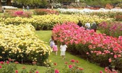 Rose Garden Ludhiana