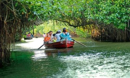 Pichavaram Backwater