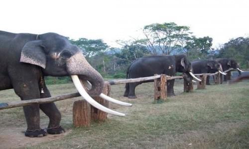 Theppakadu Elephant Camp