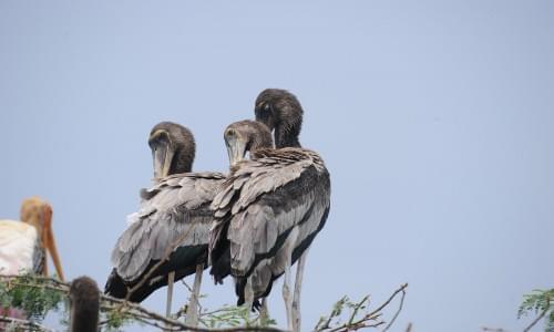 Ariyakulam Bird Sanctury