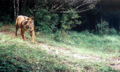 Mundanthurai Tiger Reserve
