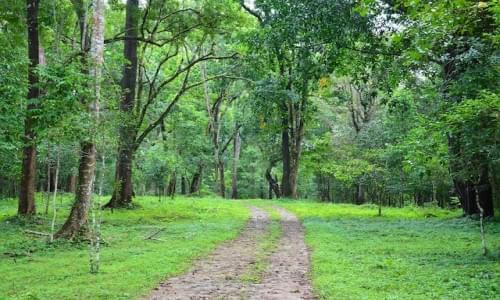 Monom Pally Forest