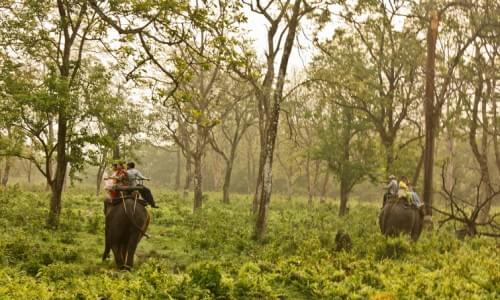 Jaldapara Wildlife