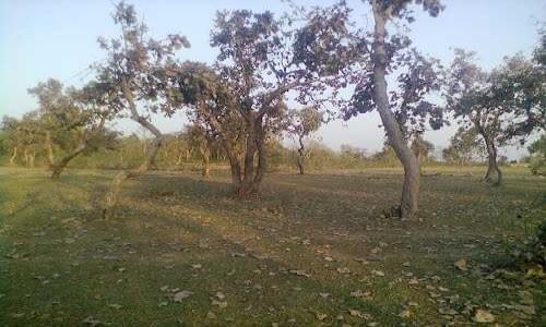 Rakab Forest