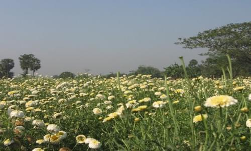 Shankarpur Farm