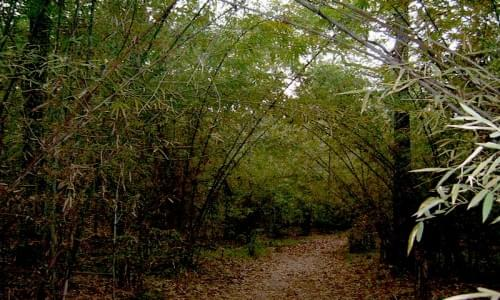 Pranahita Wildlife Sanctuary