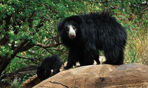 Daroji Bear Santuary