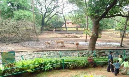 Thissur Zoo