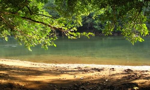 Nedumkayam Rain Forest