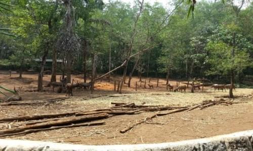 Abhayaranyam Zoo
