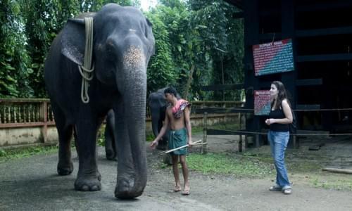 Elephant Crall