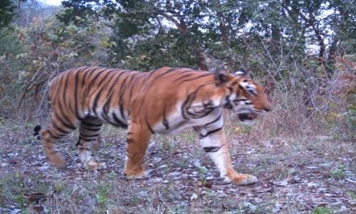 Satkosia Tiger Reservation Project