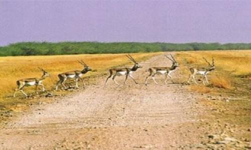 Blackbuck National Park