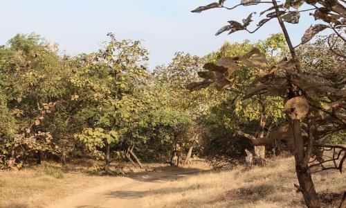 Gir Forest