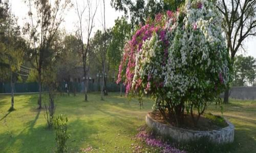 Sultan Pur Bird Santuary