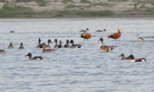Lakh Bahosi Bird Santuary