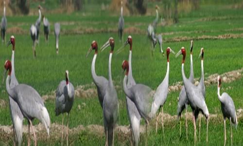 Saman Bird Santuary