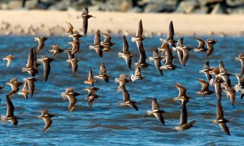 Okhla Bird Santuary