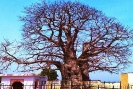 justwravel-Hamirpur