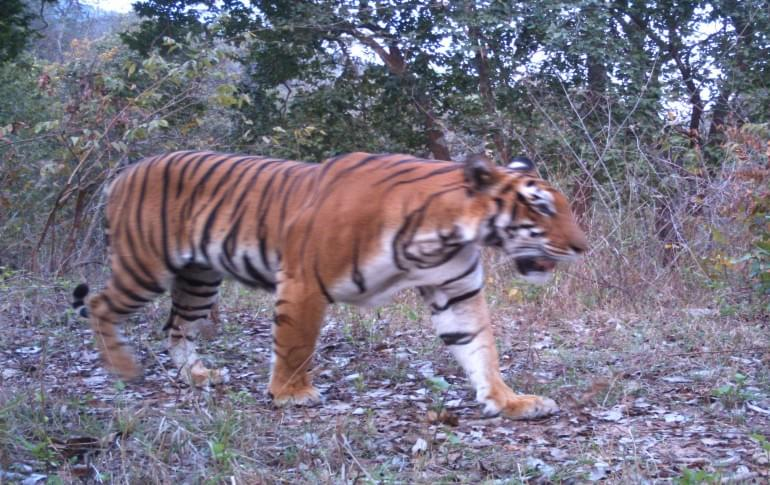 Justwravel_Angul_1478679321_0Satkosia_Tiger_Reservation_Project.jpg