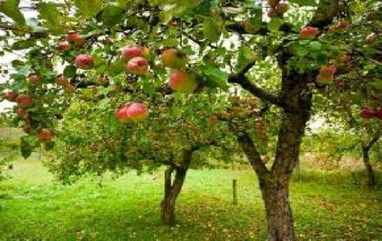 Justwravel_Bomdila_1480229967_0apple_orchard.jpg