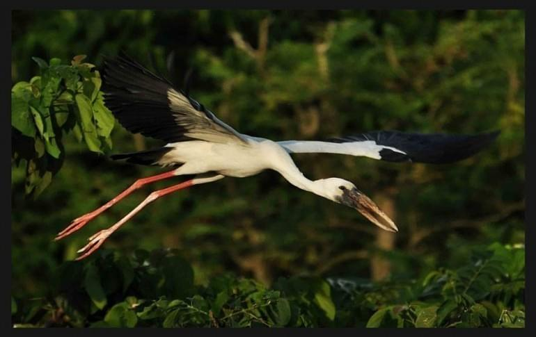 Justwravel_Raiganj_1470636610_1rauganj_wildlife_sanctuary.jpg