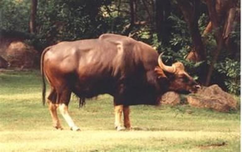 Justwravel_Warangal_1484032877_0eturnagaram-wildlife.jpg