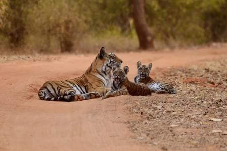 2-Night-3-Days-Pench-National-Park-Tour-Package-JustWravel-1597394588.jpg - JustWravel