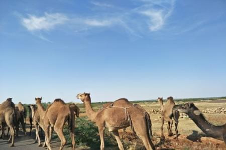 3-Day-Tour-of-Rann-of-Kutch-Gujarat-JustWravel-1597387294.jpg - JustWravel