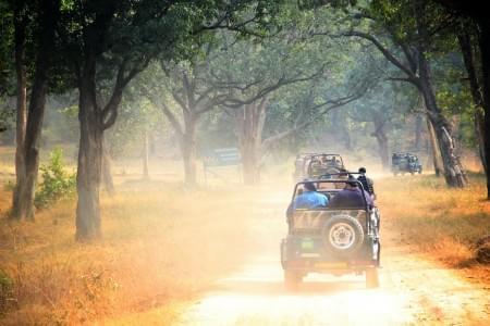 3-Night-4-Days-Bandhavgarh-National-Park-Tour-Package-JustWravel-1597394502.jpg - JustWravel