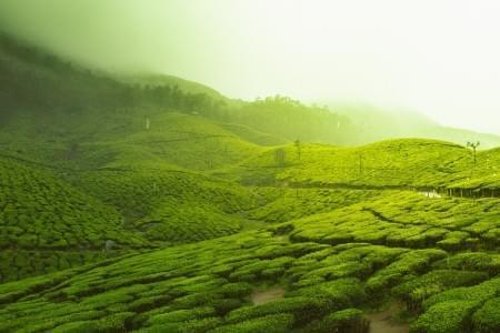 3-Night-4-Days-Munnar-and-Thekkady-Tour-Package-JustWravel-1597393475.jpg - JustWravel