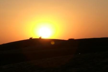 5-Night-6-Days-Rajasthan-tour-JustWravel-1597387392.jpg - JustWravel