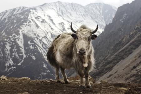 6-Night---7-Days-Sikkim-Tour-with-Yumthang-&-Gurudongmar-Lake-JustWravel-1597388275.jpg - JustWravel