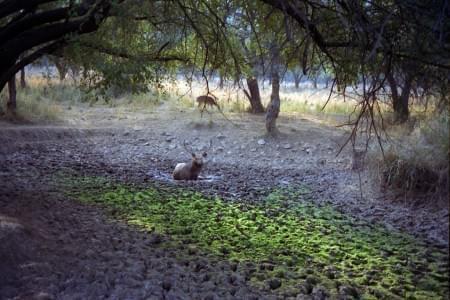 Adventurous-Tour-Package-of-Sariska-Tiger-Reserve-Park-JustWravel-1597391338.jpg - JustWravel