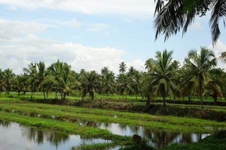 Experiential-Backpacking-trip-to-Kerala-JustWravel-1597384237.JPG - JustWravel