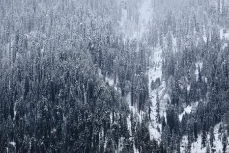 Experiential-trip-to-Himachal-JustWravel-1597384190.JPG - JustWravel