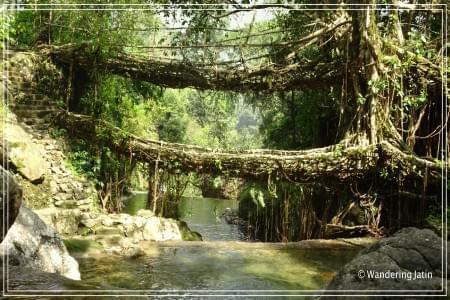 Meghalaya-Tour-and-Safari-in-Kaziranga-JustWravel-1597384111.JPG - JustWravel
