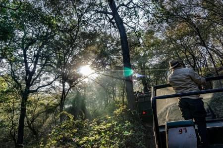 Wildlife-Tour-Package-of-Ranthambore-with-Jaipur-JustWravel-1597390905.jpg - JustWravel