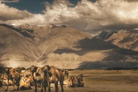 Wondrous-Leh-Ladakh-Tour-Package-with-Kargil-and-Srinagar-JustWravel-1597388995.jpg - JustWravel