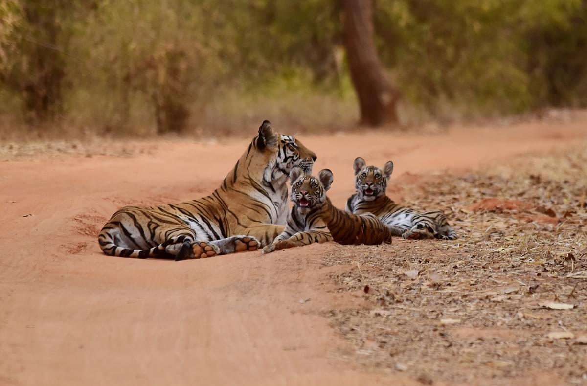 2-Night-3-Days-Pench-National-Park-Tour-Package-JustWravel-1597394588-2.jpg