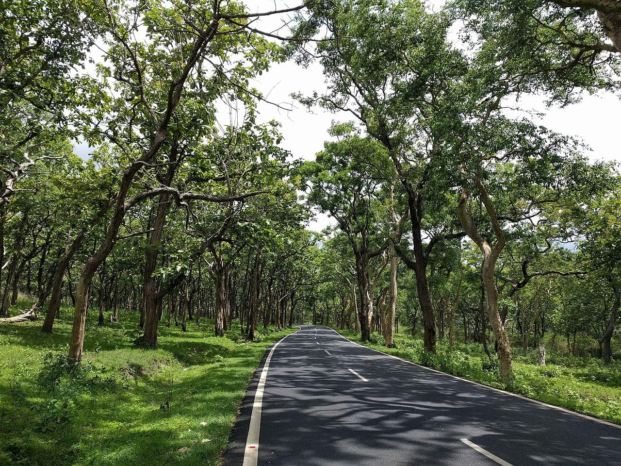 4-Night-5-Days-Mysore-and-Bandipur-National-Park-Tour-Package-JustWravel-1597395349-1.jpg